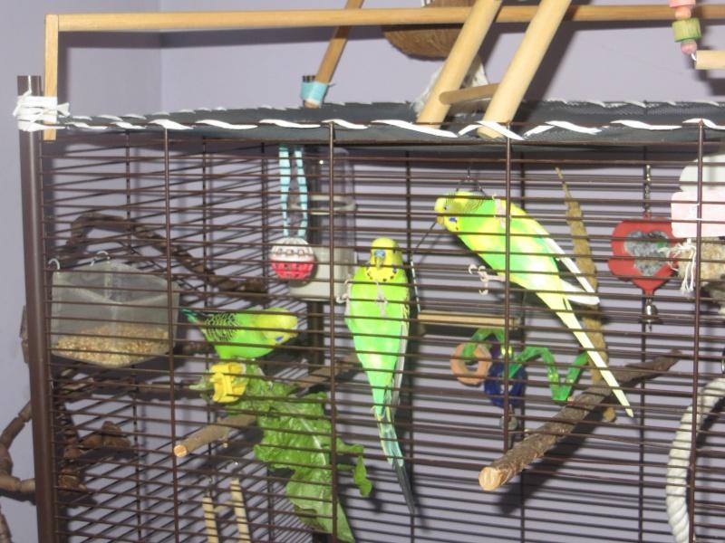 Petit Oiseau, Piwi, Plum & Toufy. Img_1519