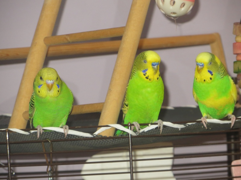 Petit Oiseau, Piwi, Plum & Toufy. Img_1521