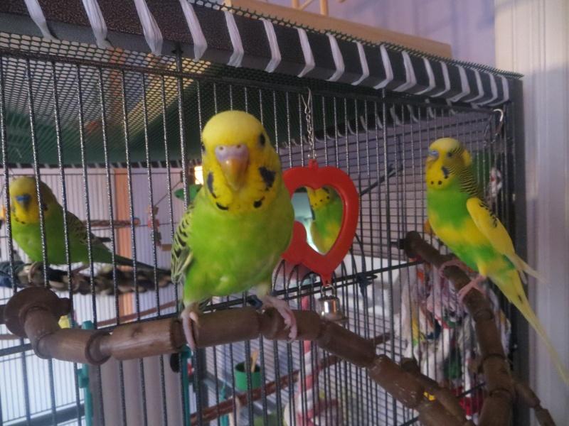 Petit Oiseau, Piwi, Plum & Toufy. - Page 3 Img_2111