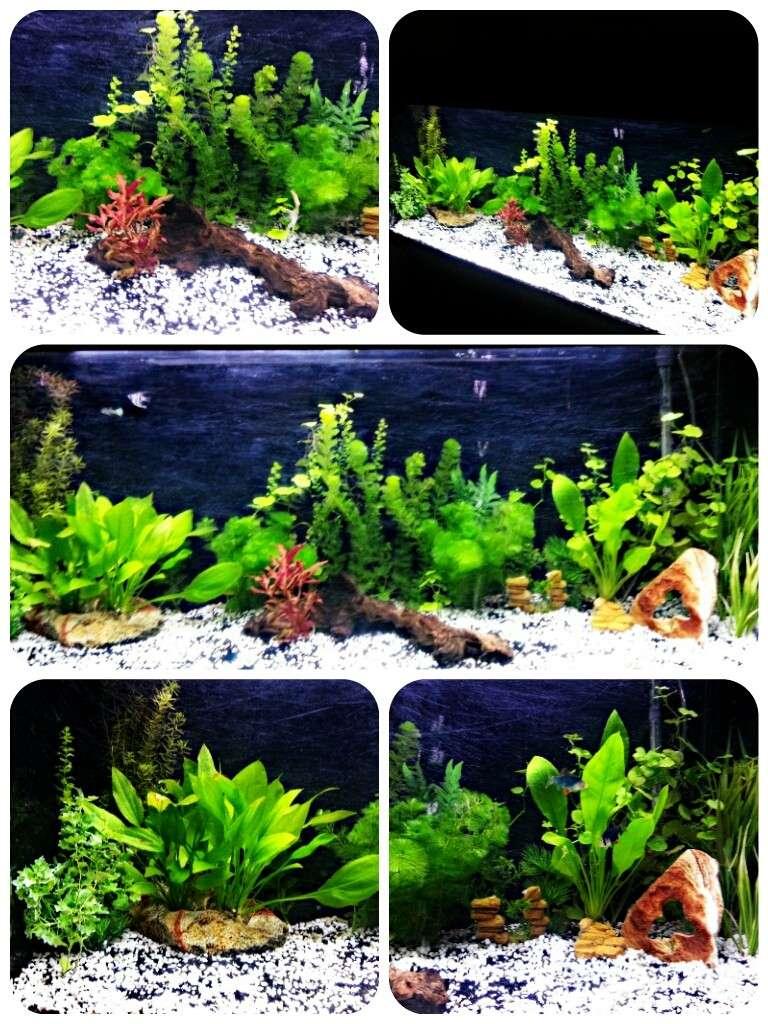 Projet aquarium 240l Picsar13