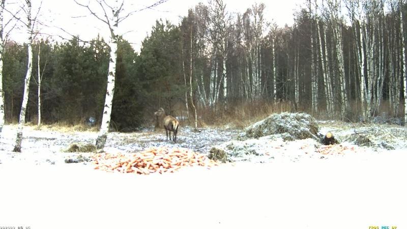 Red Deer Cam (Saarema Island)  - Page 6 Vlcsn101