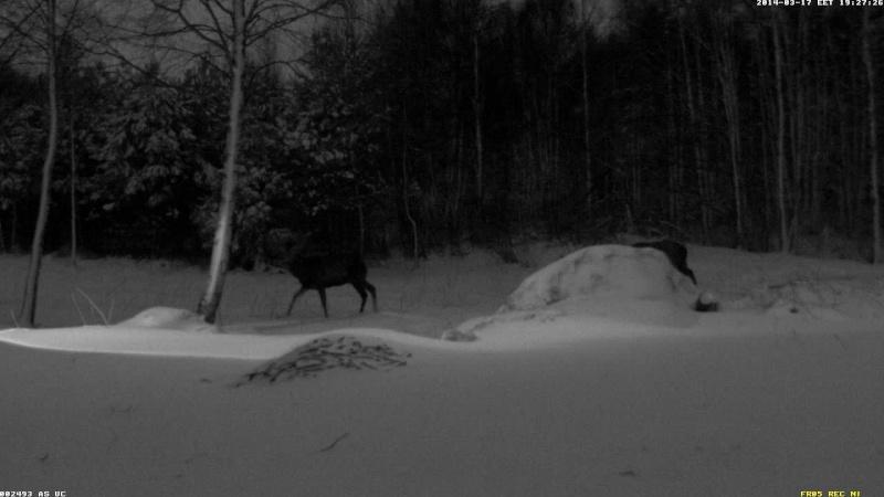 Red Deer Cam (Saarema Island)  - Page 6 Vlcsn104