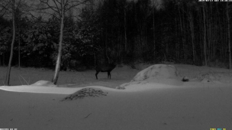 Red Deer Cam (Saarema Island)  - Page 6 Vlcsn105