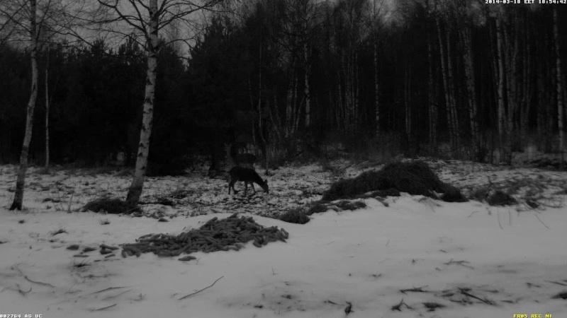 Red Deer Cam (Saarema Island)  - Page 6 Vlcsn107