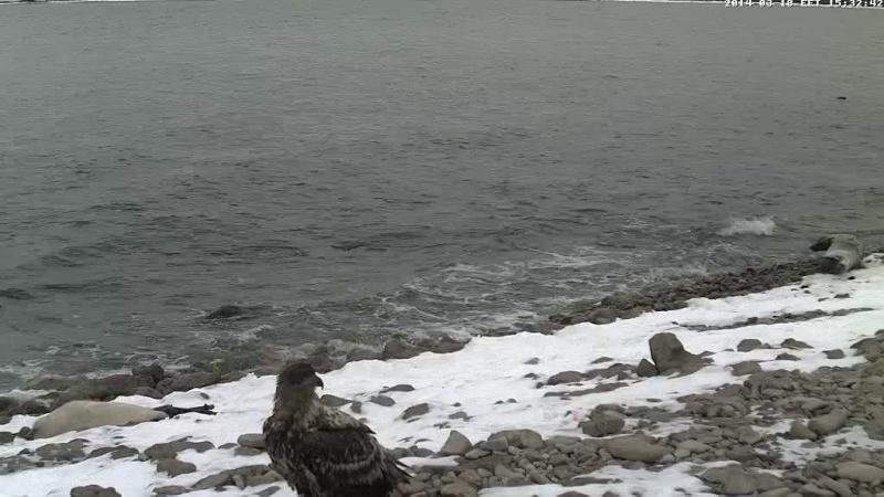 Grey Seal webcam - Page 14 Vlcsn109