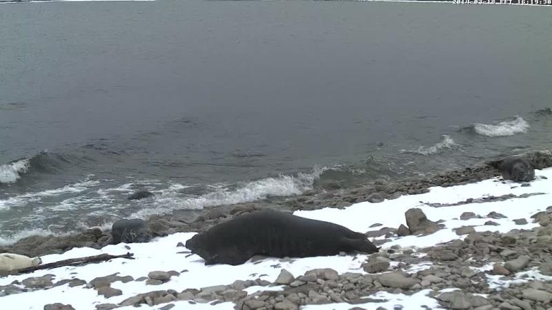 Grey Seal webcam - Page 14 Vlcsn110