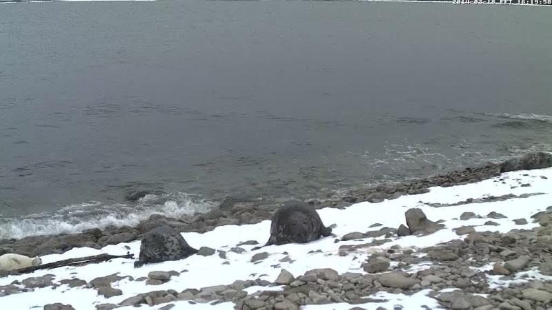 Grey Seal webcam - Page 14 Vlcsn111