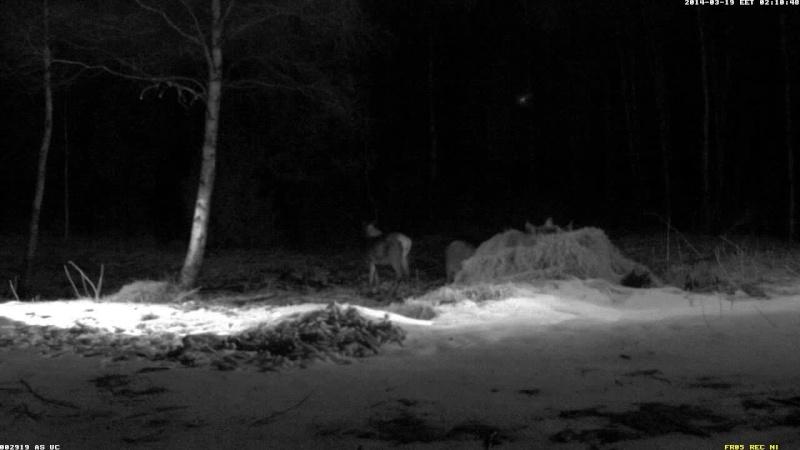 Red Deer Cam (Saarema Island)  - Page 6 Vlcsn117