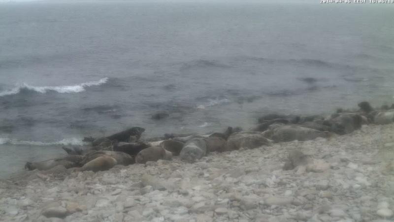 Grey Seal webcam - Page 14 Vlcsn142