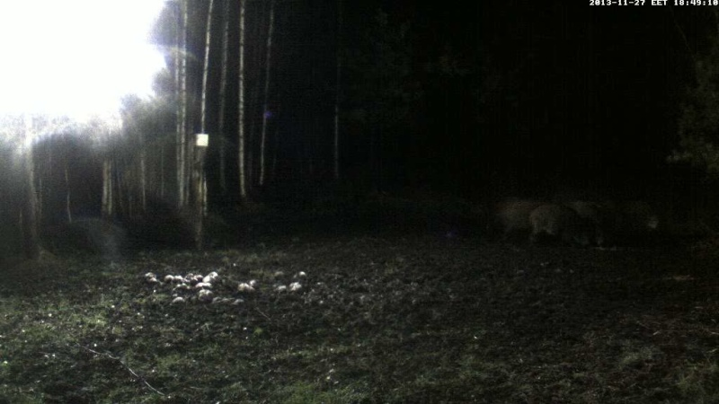 Boars Cam, Winter 2013 - 2014 Vlcsna13