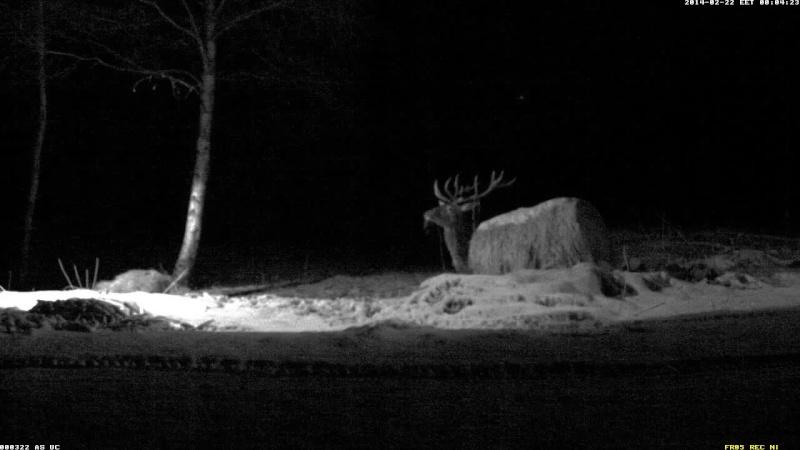 Red Deer Cam (Saarema Island)  Vlcsna38