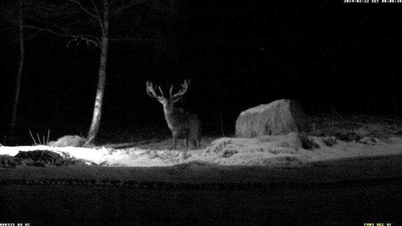Red Deer Cam (Saarema Island)  Vlcsna39