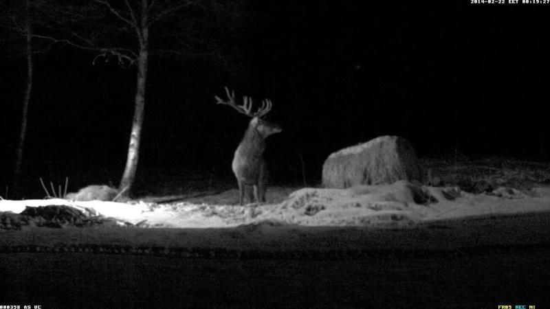 Red Deer Cam (Saarema Island)  Vlcsna40