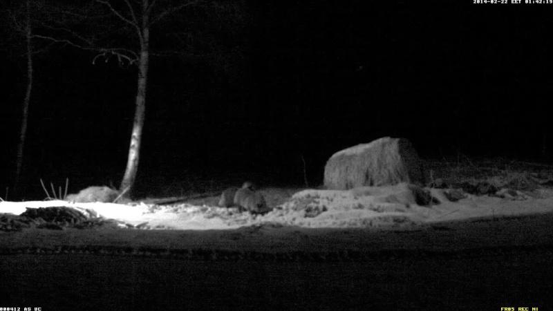 Red Deer Cam (Saarema Island)  Vlcsna41