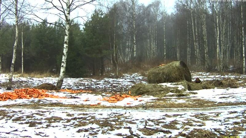 Red Deer Cam (Saarema Island)  Vlcsna43