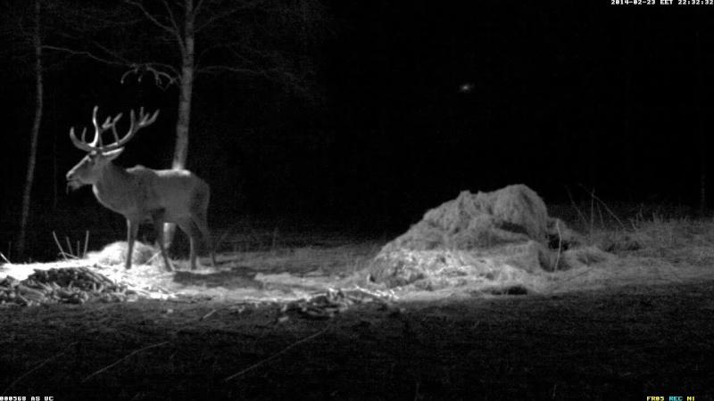 Red Deer Cam (Saarema Island)  Vlcsna51