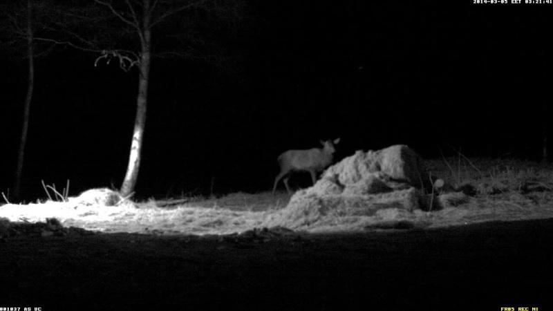Red Deer Cam (Saarema Island)  - Page 4 Vlcsna80