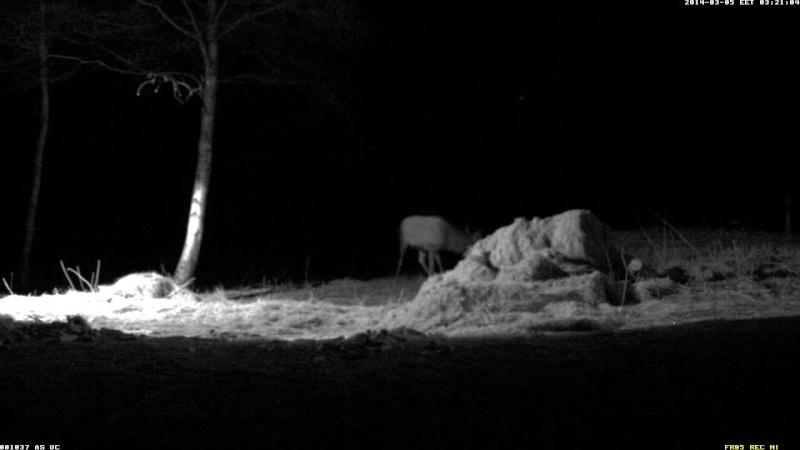 Red Deer Cam (Saarema Island)  - Page 4 Vlcsna81