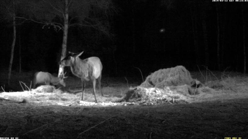 Red Deer Cam (Saarema Island)  - Page 5 Vlcsna88