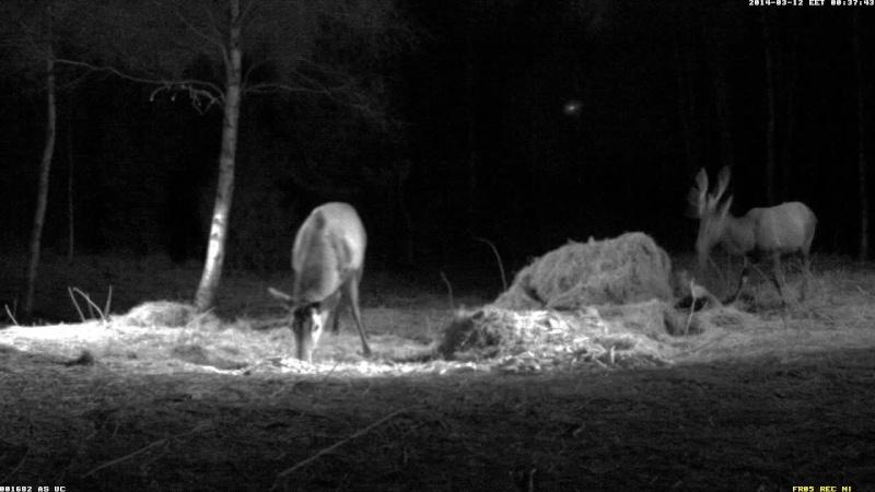 Red Deer Cam (Saarema Island)  - Page 5 Vlcsna90