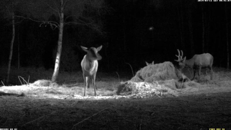Red Deer Cam (Saarema Island)  - Page 5 Vlcsna91