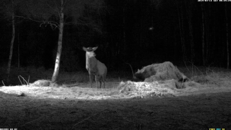 Red Deer Cam (Saarema Island)  - Page 5 Vlcsna94