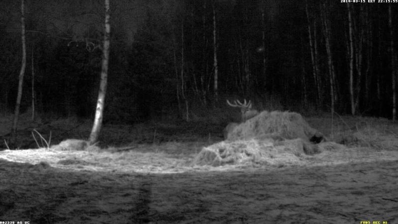 Red Deer Cam (Saarema Island)  - Page 6 Vlcsna97