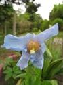 quelques floraisons Florai11