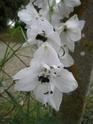 quelques floraisons Florai13