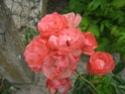 quelques floraisons Florai18