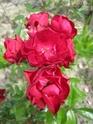 quelques floraisons Florai19