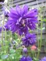 quelques floraisons Florai20