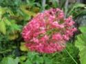 quelques floraisons Florai21