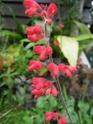 quelques floraisons Florai22
