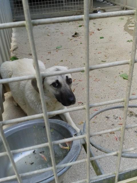 (Re)donner confiance à une chienne terrorisée - Page 2 2014-010