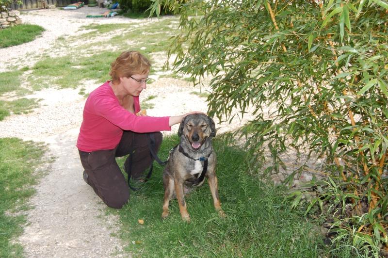 (Re)donner confiance à une chienne terrorisée - Page 4 2014-013