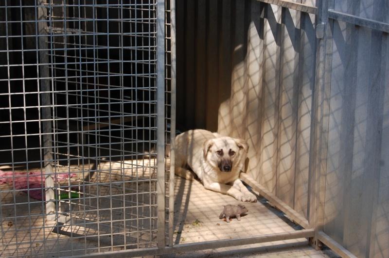 (Re)donner confiance à une chienne terrorisée - Page 4 2014-014
