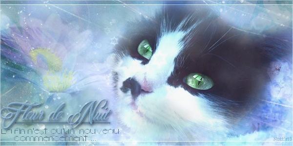 Boule de Soleil - chaton du Clan du Tonnerre Nuitnu11