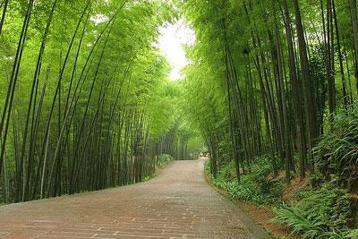 [Temë islame] Ç'është jeta e mirë?  Pyjet-10