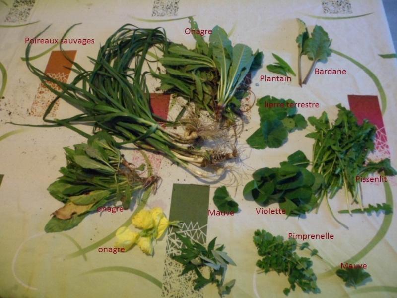 [Atelier plantes sauvages] Cueillette des plantes sauvages comestibles Sam_2011