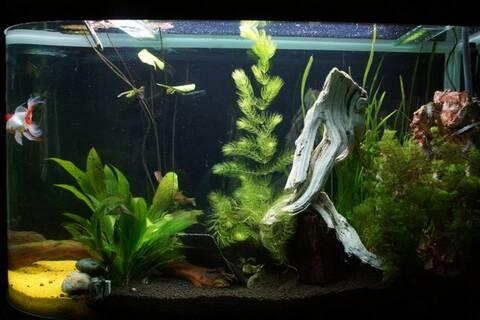 Quel Profondeau Un Aquarium Pour Leds Douce gybf76