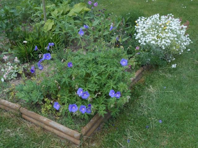 geranium vivace - Page 4 Fleurs98