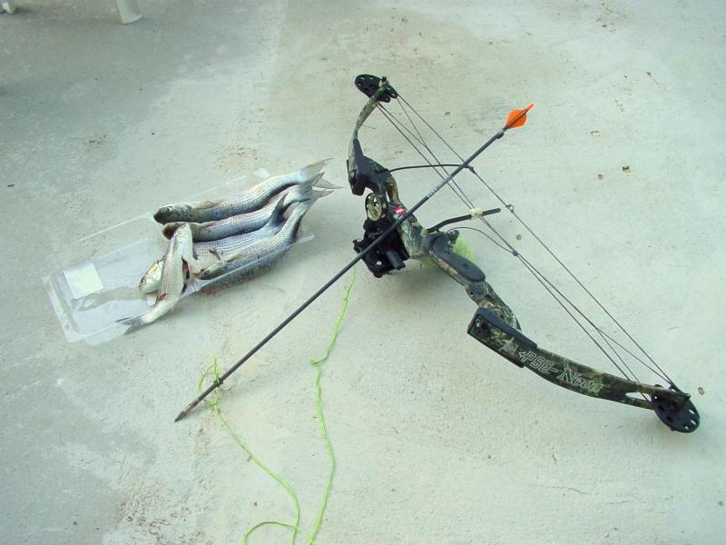 Pêche à l'arc moderne via PLC ! Dsc00015