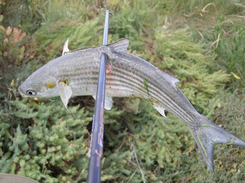 Pêche à l'arc moderne via PLC ! P8250010