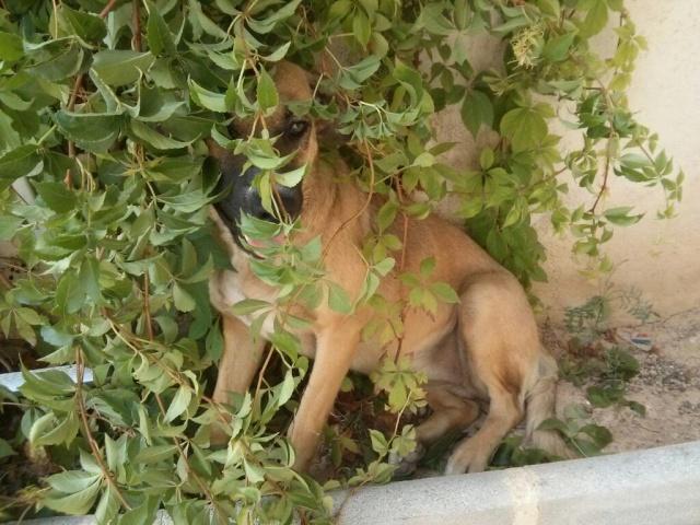 Carina, encore une chienne qui a eu la chance de croiser la route de Boliluna 1739_211