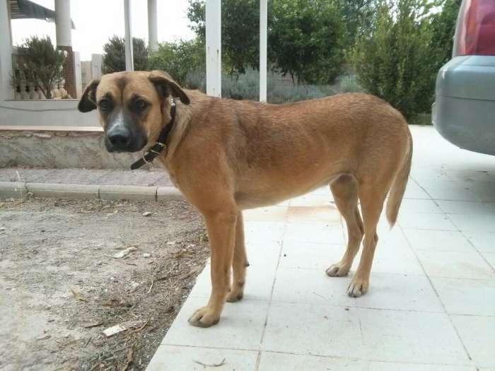 Carina, encore une chienne qui a eu la chance de croiser la route de Boliluna 1742_212