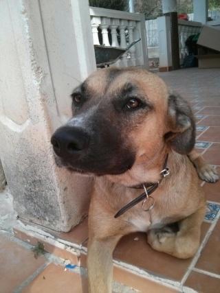 Carina, encore une chienne qui a eu la chance de croiser la route de Boliluna 1744_211