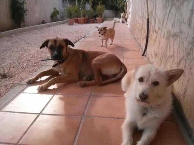Carina, encore une chienne qui a eu la chance de croiser la route de Boliluna 1752_210