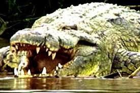 Le monstre du lac Tanganyika Gustav10