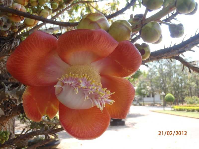 Fleur de Wat P2210011